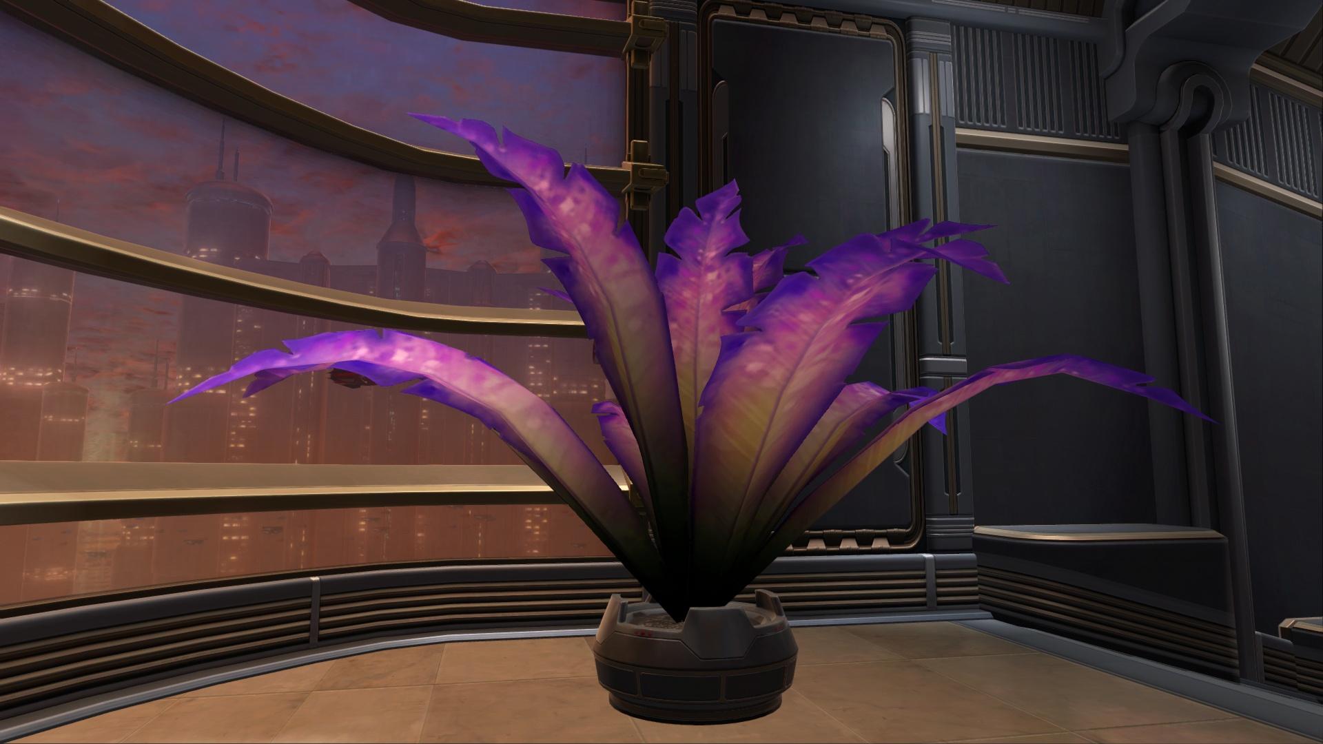 Potted Plant: Violet Fern